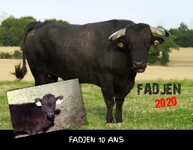 Calendrier vaches 2020 - association anti corrida Fadjen