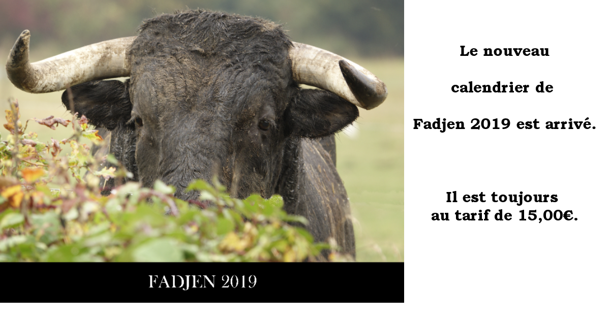 calendrier-vache-bovin-2019-association-anti-corrida-fadjen-couverture2.png